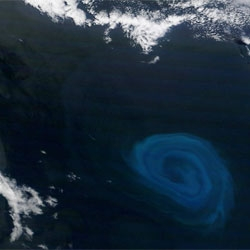 New Scientist on huge oceanic eddies, 150km wide. Stunning image captured by NASA's Terra satellite last December.
