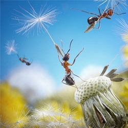 Andrey Pavlov's macro photography of ants.