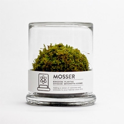 The Mosser, a small glass terrarium filled with a simple round moss ball.