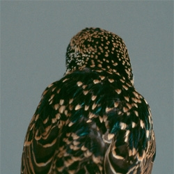 Audrey Corregan's obviously series captures the backs of distinctive bird species. Beautiful!