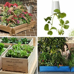 Container gardening ~ it can be as creative as you are! Here's a look at some of our favorite options as we brainstormed on what to do in the yard!