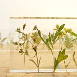 "Norihiko Terayama of Studio Note's beautiful ""g,a,r,d,e,n 2012""."
