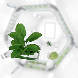 Piotr Szpryngwald's Plant in collaboration with NASA Space Center Houston. A System allowing the growth of fresh food as an addition to the daily diet of an astronaut. Developed with Mirko Ihrig.