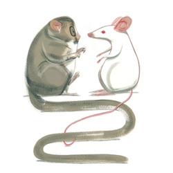 Illustrator Ping Zhu's delightful animals.