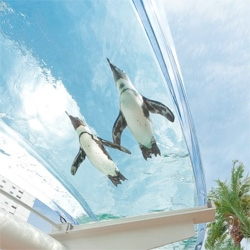 Watch penguins fly overhead in this ring-shaped pool at The Sunshine Aquarium in the Ikebukuro district of Tokyo.