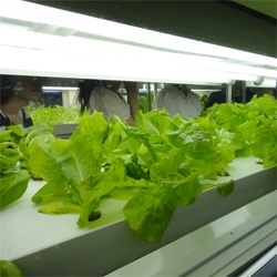 The Agri-Cube from Japan's Daiwa House Industry is a system which can grow up to 10,000 heads of lettuce per year, but small enough to fit in a parking-space.