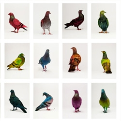 Love this project from Julian Charriere and Julius von Bismarck titled 'Some Pigeons are More Equal than Others' that involved dying 35 pigeons in the city of Copenhagen.
