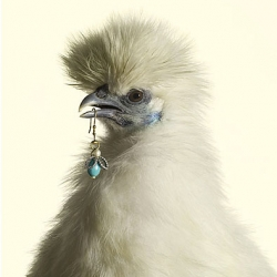Bizarre chicken photo series for Marie Claire by Peter Lippmann.