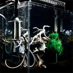 Makoto Azuma's incredible underwater bonsai.