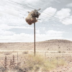 Photographer Dillon Marsh's Assimilation series captures the nests of weaver birds in the southern Kalahari.