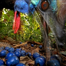 Christian Ziegler's stunning image of a Southern Cassowary took first place in the nature category of the 2013 World Press Photo Awards.