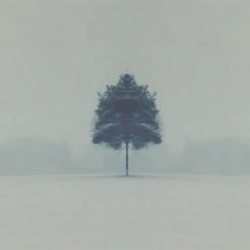 Symmetrees, lovely footage of a snow storm by  Oliver Latta.