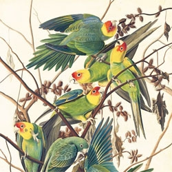 Audubon's Aviary: The Complete Flock, a stunning exhibition of Audubon's beautiful bird paintings at the New York Historical Society.