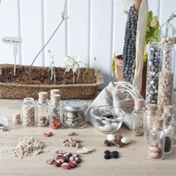 Seed Savour, lovely growing kits from Studio Harvest (Sebastiaan Sennema)