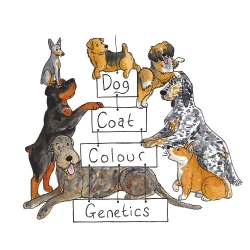 A cute illustrated guide to the genetics and heritability of dog coat colors.