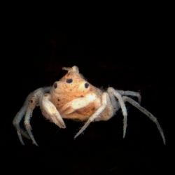 This three-eyed crab was found in New Zealand and that extra eye might just be its conjoined twin.