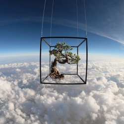 Exobiotanica - botanical space flight by Azuma Makoto puts bonzai in space.