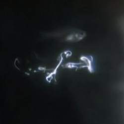 Bioluminescence as cardinal fish swallow (and regurgitate) ostracods. Incredible footage from the BBC.