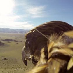 Mongolia from the back of a Golden Eagle. David De Vleeschauwer and Debbie Pappyn travel to Mongolia to capture the point of view of a golden eagle as he soars over the Altai Mountains.