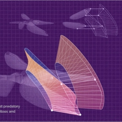 Animated gifs illustrating the mechanics of flight by Eleanor Lutz.