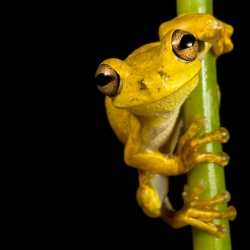 In Search of Lost Frogs, a beautiful book from Robin Moore with incredible macro photos of frogs.