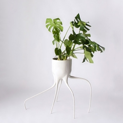 Monstera pots by Tim van de Weerd.
