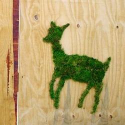 Green Graffiti by Eco-minded street artist, Edina Tokodi, in Brooklyn