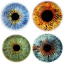 Rankin's Eyescapes are incredible ~ i can't even imagine how amazing it would be to stare into these as large prints...