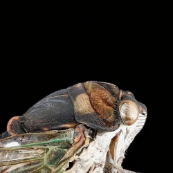Help record the sounds of summer and help create an Atlas of North American Calling Insects. Great project from entomologist Sam Droege of the United States Geological Survey.
