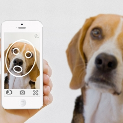 PiP (Positive Identification of Pet) applies facial recognition to pets, providing a pet recognition system to help find lost pets.