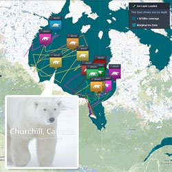 Google Street View and Polar Bears International create street view images of polar bears in Churchill, Canada.