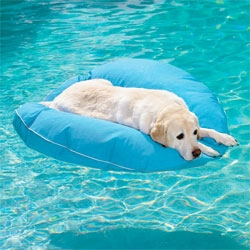 Pet Floats, so your pets can enjoy a day or relaxing as they drift around the pool.