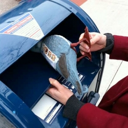 The Letter Writer's Association brings by post by pigeon with their plastic Pigeon Post.