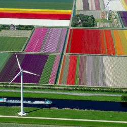 Stunning photos of fields of tulips in Northern Holland by Normann Szkop.