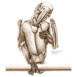 A look inside Katrina van Grouw's stunning The Unfeathered Bird: An Illustrated History of Avian Anatomy.