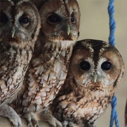The NYTimes takes a look into the surprising world of owls.
