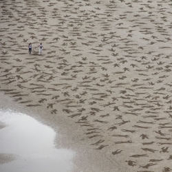 The Fallen 9000. Jamie Wardley and Andy Moss etched 9,000 figures of fallen bodies on beaches of Normandy to Commemorate Peace Day.