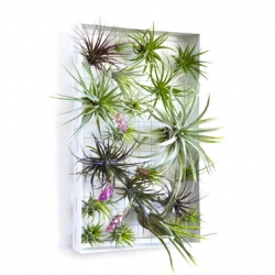 Airplantman Josh Rosen's frames and vessels designed specifically for housing airplants.