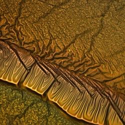 Ingrid Graz's SEM photographs of amorphous carbon deposited on glass.