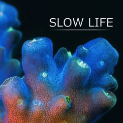 Slow life, a close up look at corals and sponges using magnified time lapse techniques from Daniel Stoupin.