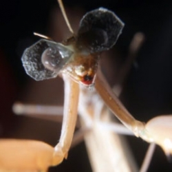 Researchers at Newcastle University fit praying mantises with tiny 3D glasses to find out more about their 3D vision.