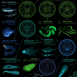 A visual compendium of glowing creatures by Eleanor Lutz.