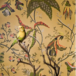 Birds of a Feather, photo series capturing pet birds staged against complementary vintage wallpaper, by Claire Rosen. Her series The Fantastical Feasts is worth a look too!