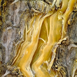 Beautiful textures and colors of bark captured by photographer Cedric Pollet.