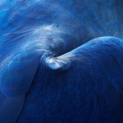 Birds, a series of closeup photos of feathers by Thomas Lohr.