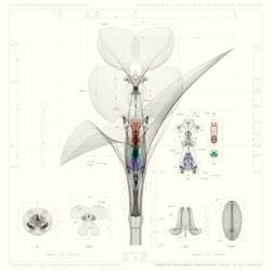 Macoto Murayama's Inorganic flora at Frantic Gallery.