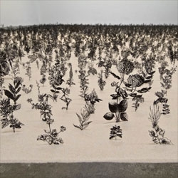 Zadok Ben David's Blackfield installation at the Tel Aviv Museum consisting of a field of cut steel Victorian botanical illustrations.