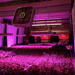 PopSci visit The Plant, Chicago's first vertical farm.