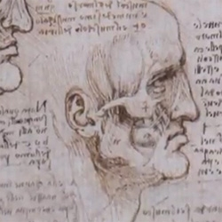 Nature gets a look at the anatomical drawings of Leonardo Da Vinci at Windsor Castle.