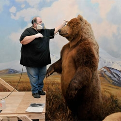 A touch up for the taxidermy at the American Museum of Natural History.